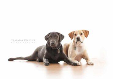 dog photography, orlando dog photography, pet photos, pet photography, orlando photography